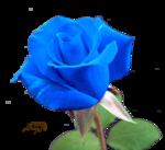 роза с.png