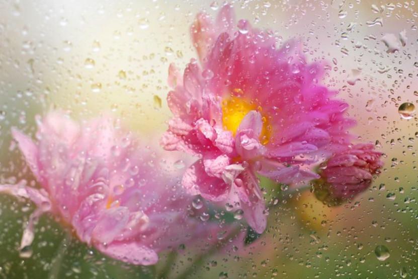 Мокрые цветы Татьяны Макушиной