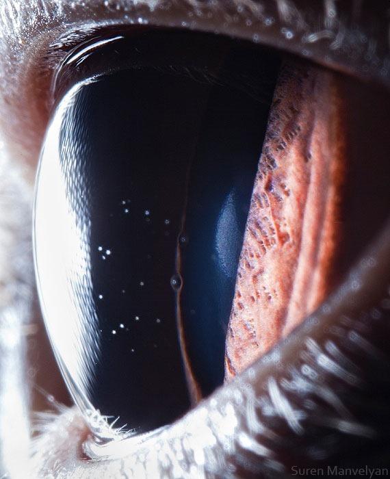 Сурен Манвесян. Фотографии глаз животных крупным 0 122fbf 81b33a91 orig