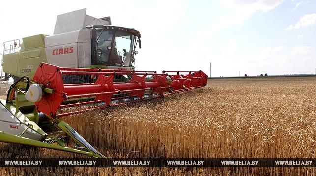 В Белоруссии стартовала жатва