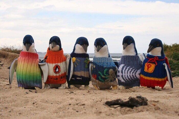 старик-вяжет-свитера-для-пингвинов.jpg