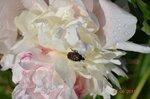 жучок на цветке