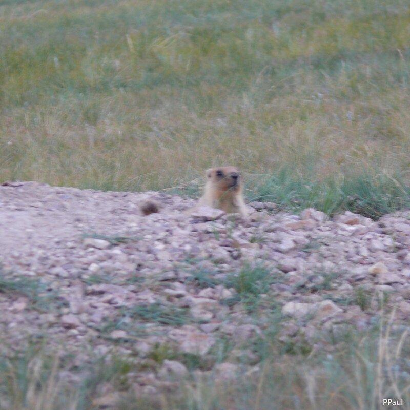природа Казахстана. Семизбуга