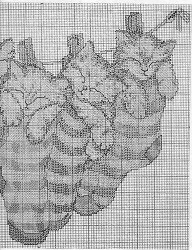 Котята в полосатых носках