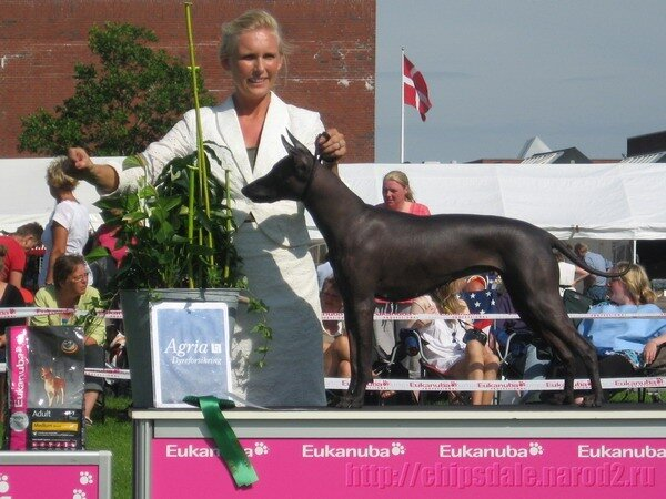Дания 2011