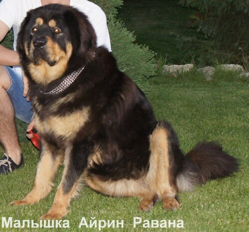http://img-fotki.yandex.ru/get/4517/6307740.3/0_75312_a77ec596_L.jpg