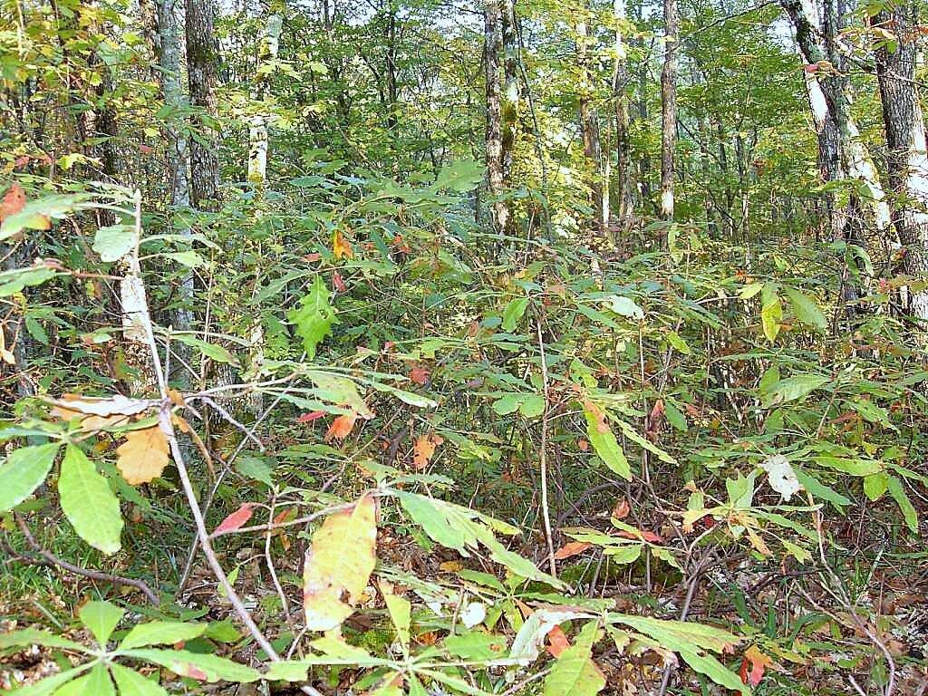 12 октября 2008, под Горячим Ключом, лес (100).JPG