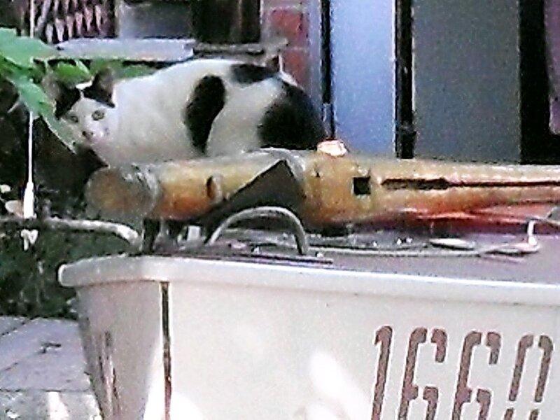 Кошка на яхте.