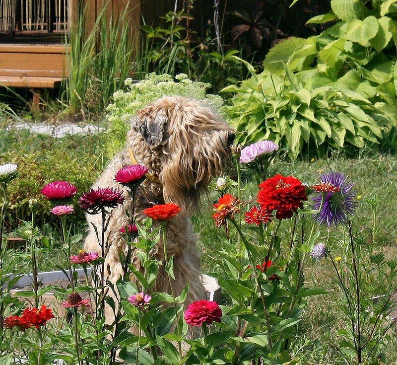 Лера в цветочках