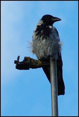 Дача. Сентябрь 2011. Синявинский орёл.