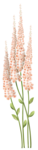 CreatewingsDesigns_SP_Flowers4.png