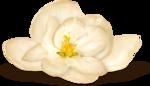 NLD Flower 3 sh.png