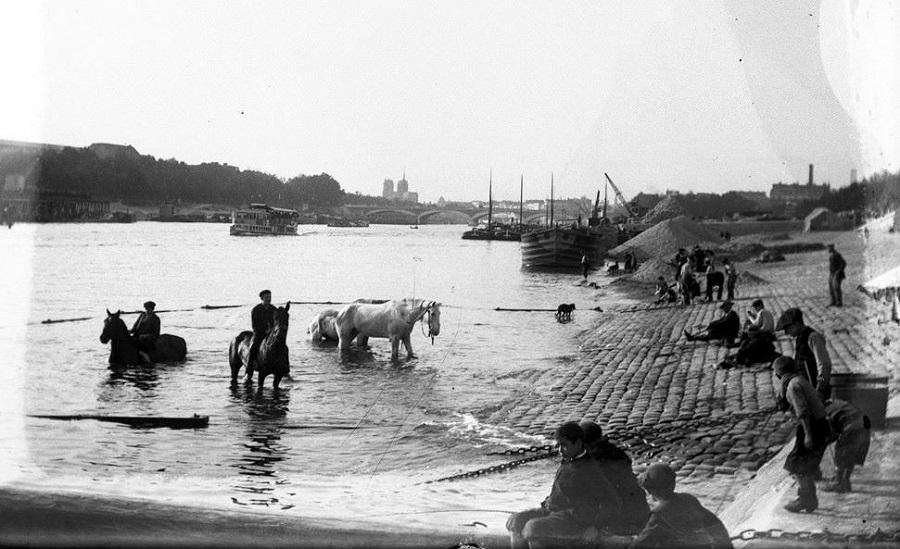 15 Le bain des chevaux dans la Seine, vers 1930.jpg