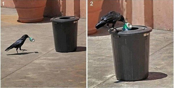 ворона выкидывает мусор