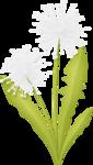 Dandelions3.png
