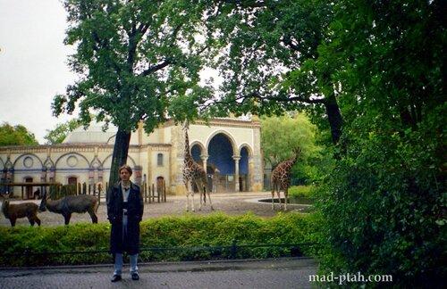 берлин, германия, зоопарк