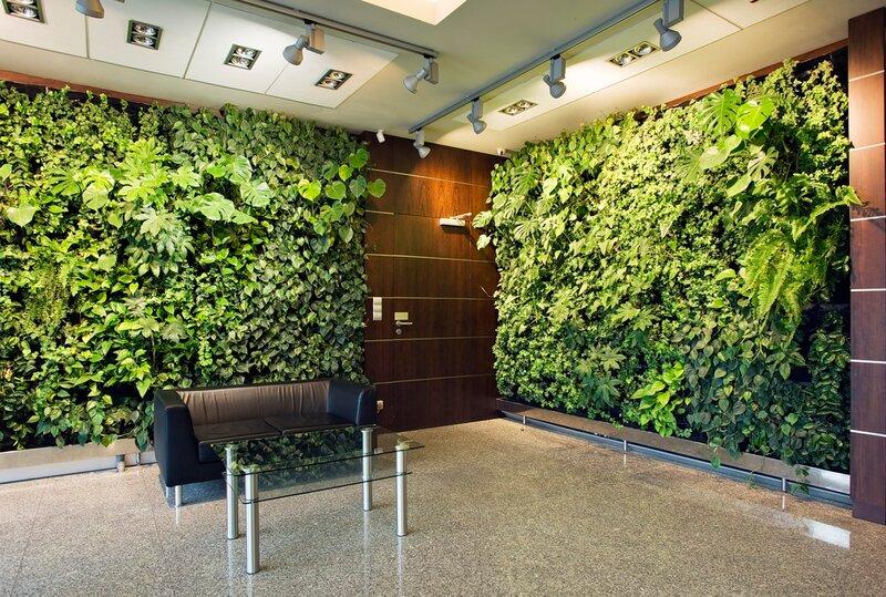 Зеленые стены своими руками