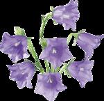 Flowers - bluebells & tinklers 2 Цветы - колокольчики 2.