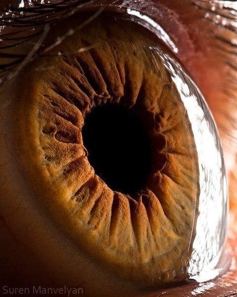 глаз человека макросъемка глазное яблоко радужка 2