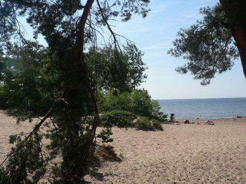 сосны на берегу