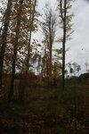 Тюрмеровский лес