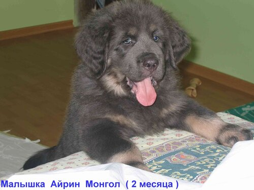 http://img-fotki.yandex.ru/get/4518/6307740.3/0_75315_9923b402_L.jpg