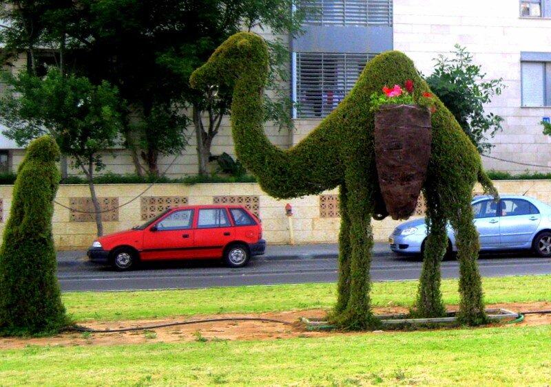 Верблюд в городе!!