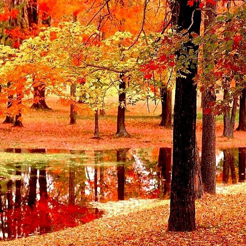 """Схема вышивки  """"Осень в лесу """".  Оригинал.  Oksana72.  Не бросайте иглы где попало, храните с ниточкой..."""