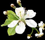 Весенний сад (28).jpg