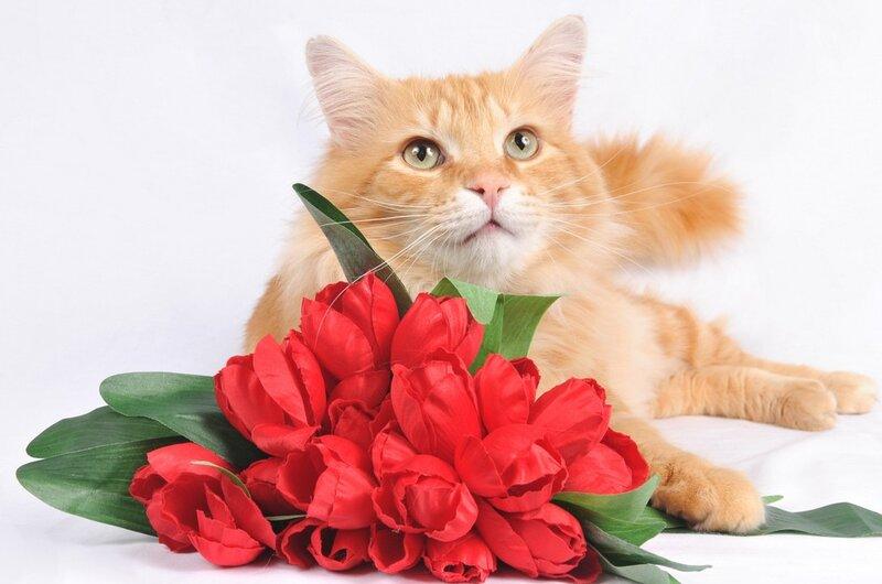 Красивые открытки с котенком с днем рождения