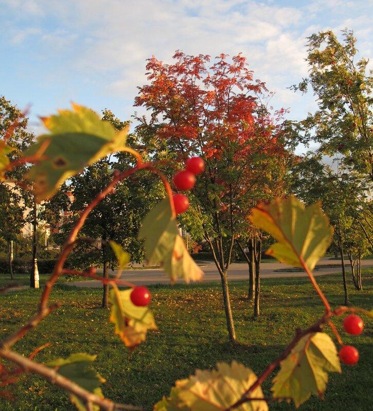 Бутовский детский парк Биеннале
