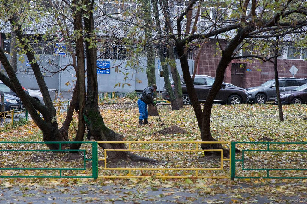 Деревья-11.jpg