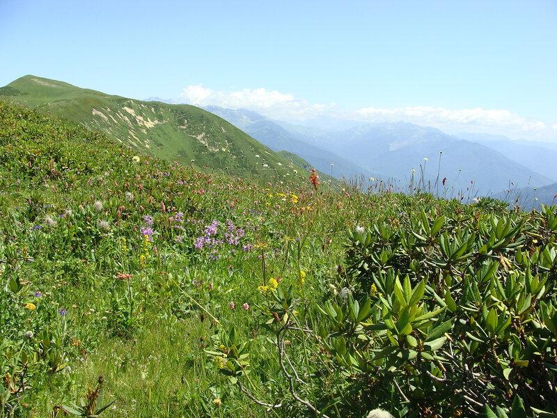 Абхазия в июле отзывы
