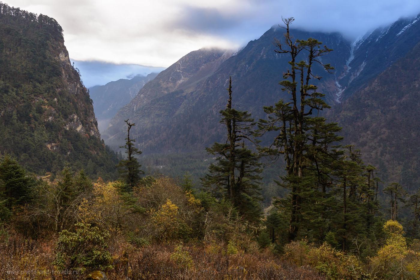 12. Согласитесь, так и тянет посмотреть, что там, в том ущелье? Отзыв о поездке в долину Yumthang Valley в штате Сикким в Индии. 8.0, 1/25, 100, -2.0 EV, 36.