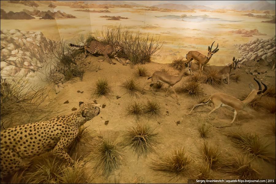 Животные, убитые ради чучел