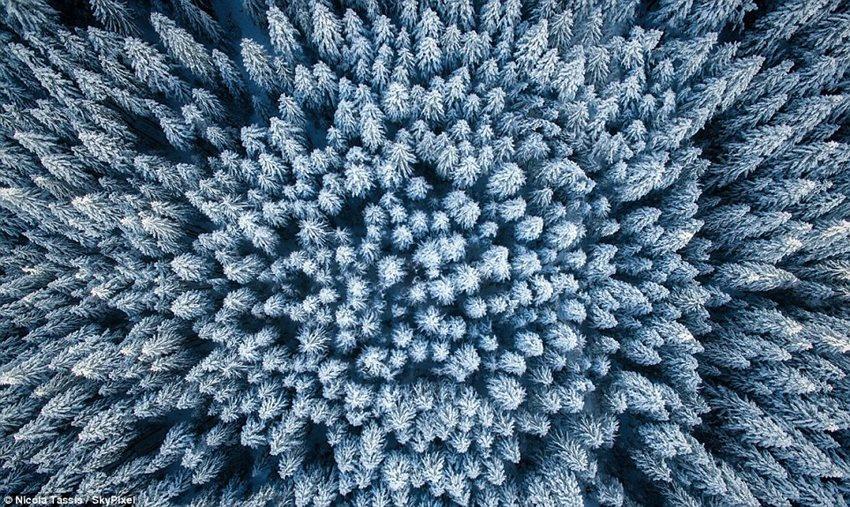 Снимки зимней природы с высоты