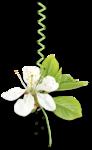 Весенний сад (60).jpg
