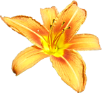 flower01_bc_summerfeeling.png