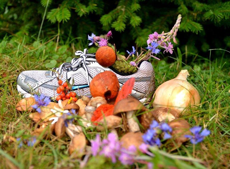 грибы и цветы