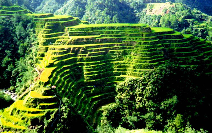 Рисовые терассы в Китае