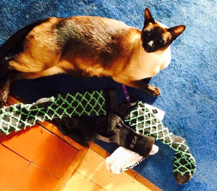 Кот-воришка таскал соседские носки и нижнее белье