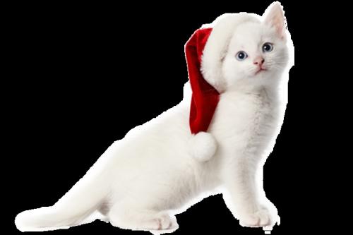 я-кошка-3.png