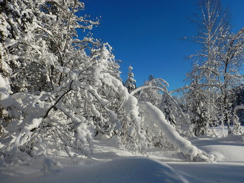 Утро в зимней тайге