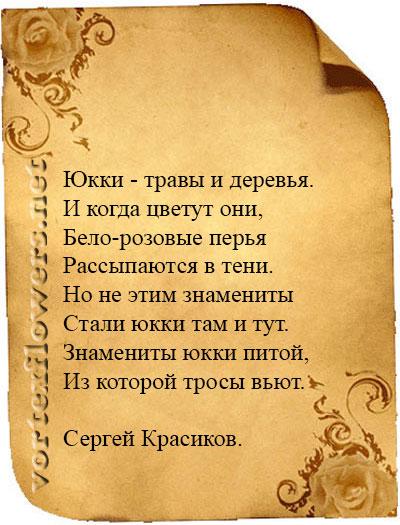 стихи о юкке