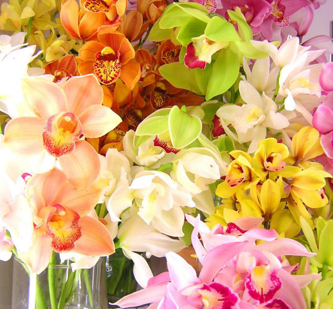 різнокольорові орхідеї