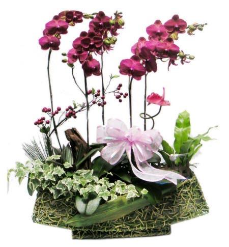 композиція з орхідеями