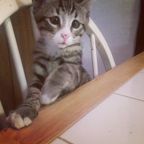 котенок c обеспокоенным выражением мордочки