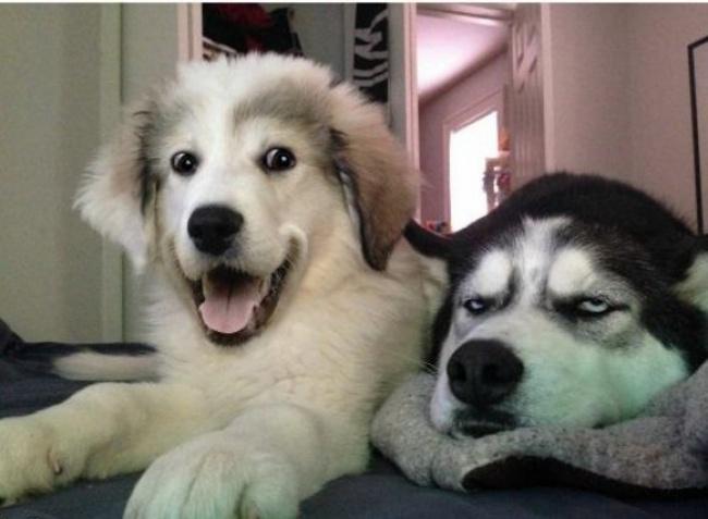Когда твой друг ждет, что тыпосмеешься над его тупой шуткой.