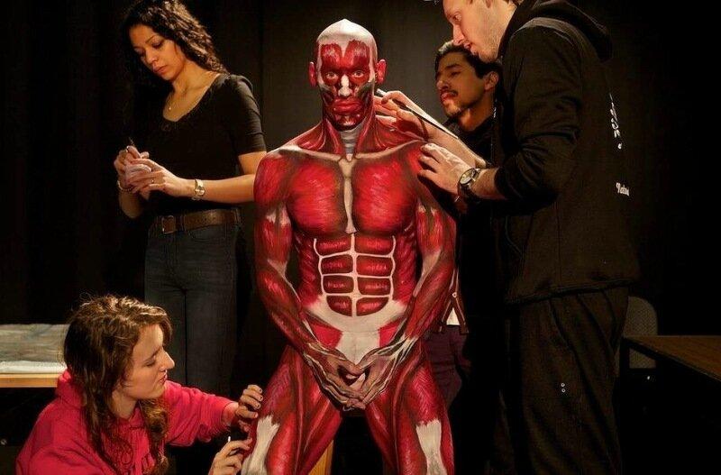 Anatomical Man: Студенты показали анатомию на живом человеке