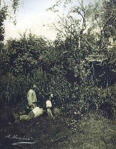 1900-е. Мальчики-птицеловы.